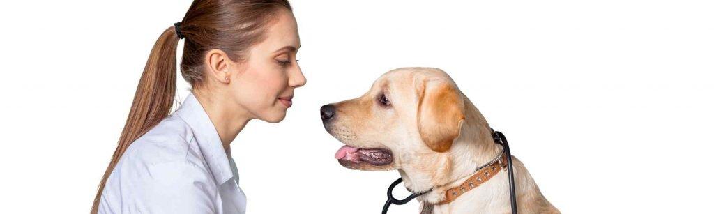 Osteopata Animale Educam