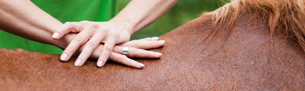 Corso di osteopatia animale educam